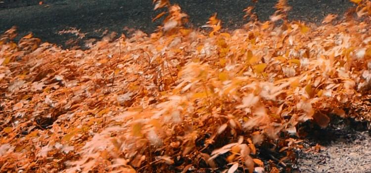 Las enfermedades del otoño
