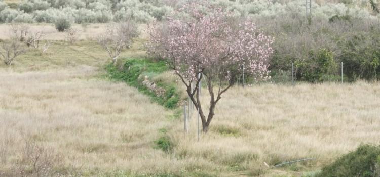 Cómo prevenir la astenia primaveral